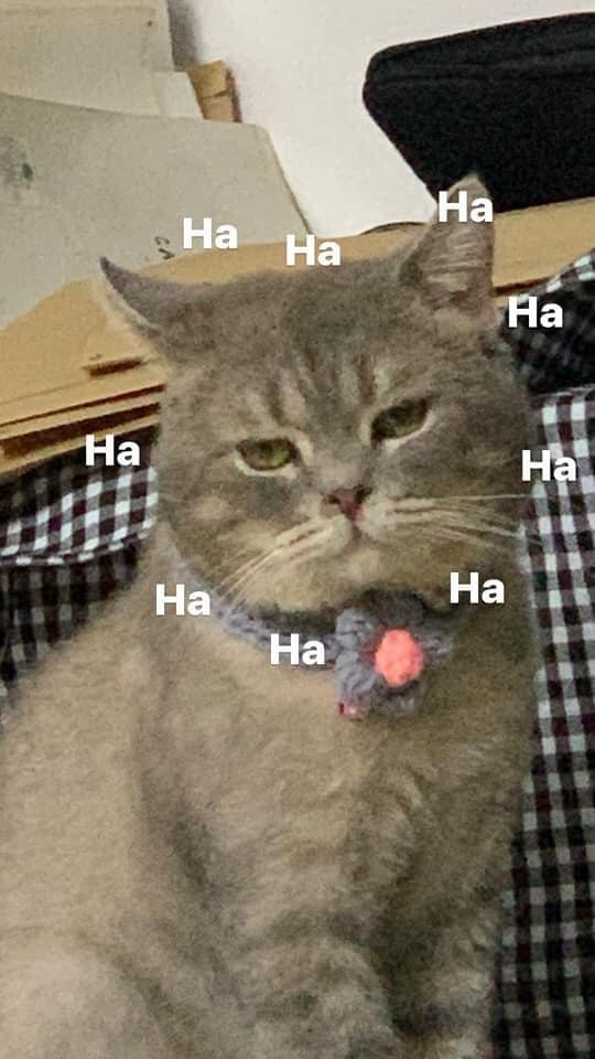 Mèo mặt buồn nhưng cười ha ha ha ha
