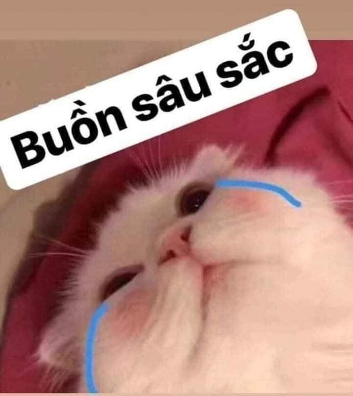 Mèo trắng khóc: buồn sâu sắc (buồn so suck)