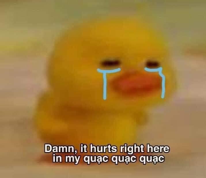 Vịt vàng khóc: damn, it hurts right here in my quạc quạc quạc