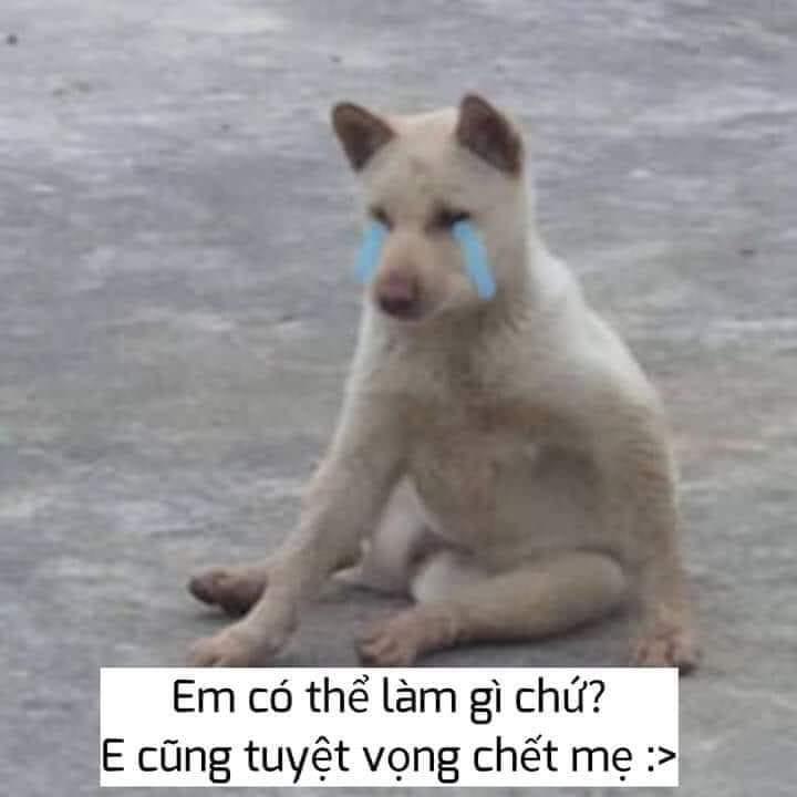 Chó khóc lóc em có thể làm gì chứ, em cũng tuyệt vọng chết mẹ