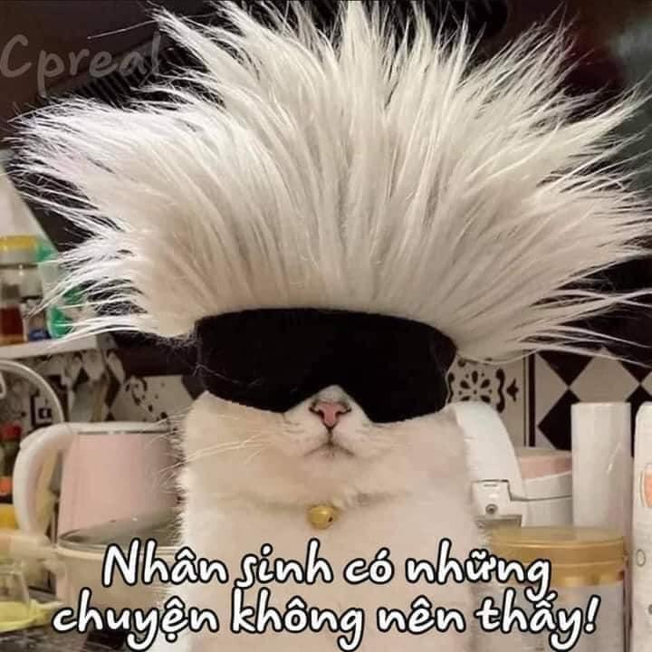 Mèo bị bịt mắt nói nhân sinh có những chuyện không nên thấy!