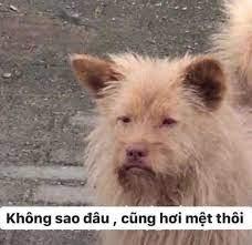 Chó lông xù: không sao đâu cũng hơi mệt thôi