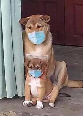 Chó mẹ và chó con buồn bã đeo khẩu trang