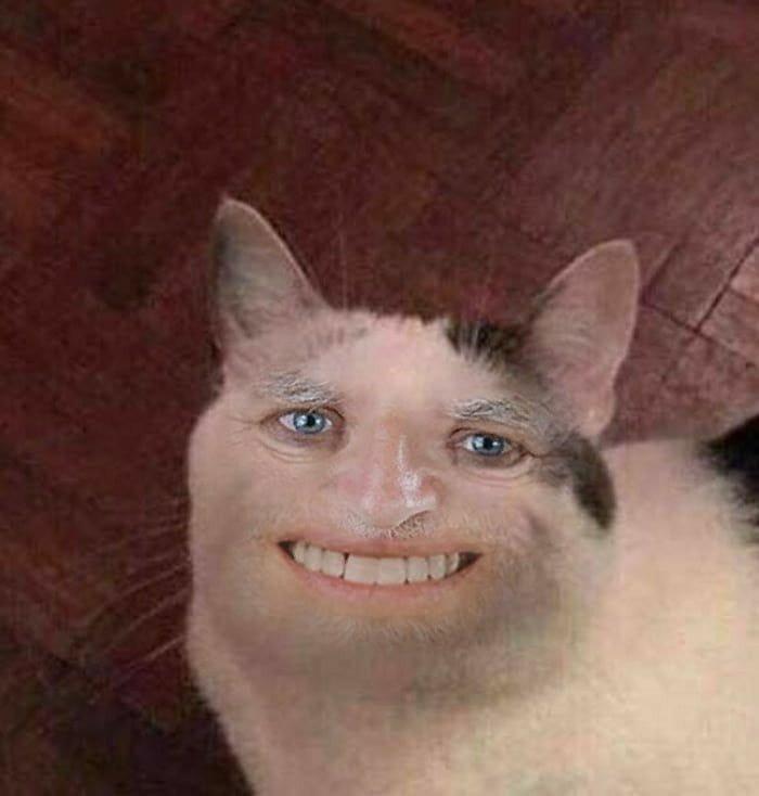 Mèo có khuôn mặt người cười khổ