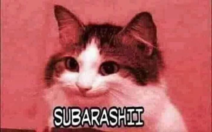 Mèo cười subarashii
