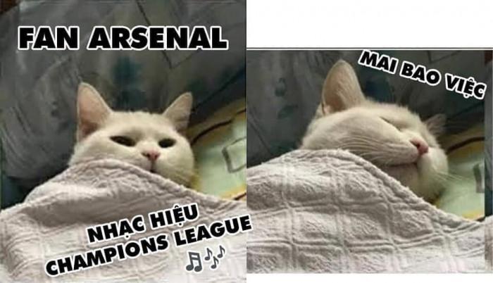 Mèo fan Arsenal nghe nhạc hiệu C1 đi ngủ mai bao việc